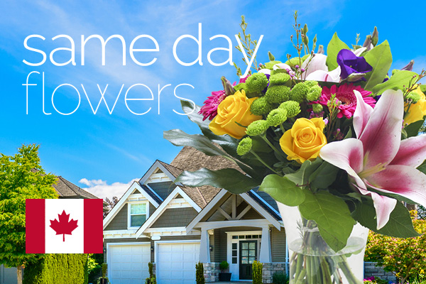 Sameday flowers delivered in Canada